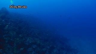 Gakkoushita_diving_m1